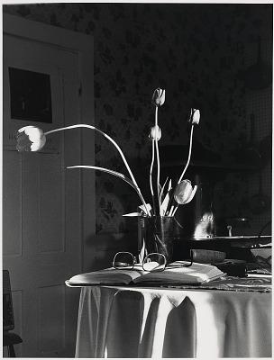 Tulips on Table, Bath, Maine