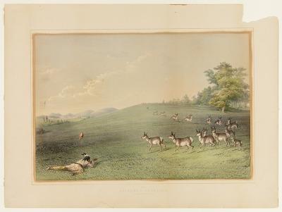 Antelope Shooting--no. 20