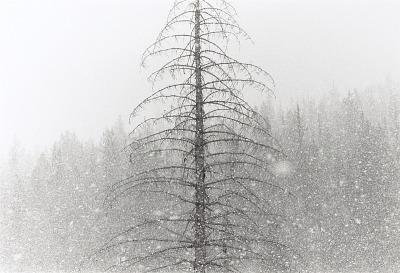 Snowfall, from the portfolio Winters: 1970-1980