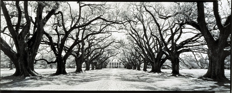 Image for Oak Alley Plantation, River Road, Vacherie, Louisiana