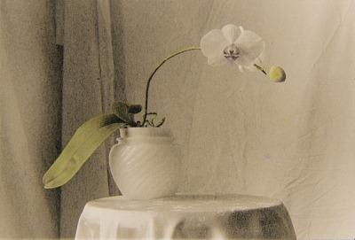 Untitled Still Life