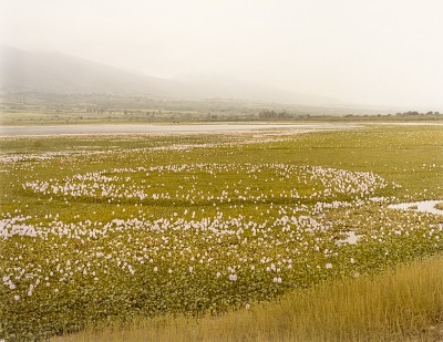 Water Hyacinth, Chapala, Jalisco, Mexico, from the portfolio Shadowless Places, Deserts of the Southwest