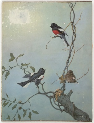 Untitled (three birds on tree branches against blue sky)