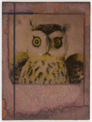 Untitled (close-up of owl)