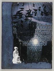 Untitled (pigeons on rainy street)