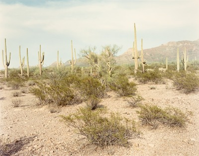 Saguaros, Organ Pipe Cactus N.M. Colorado, from the portfolio Shadowless Places, Deserts of the Southwest