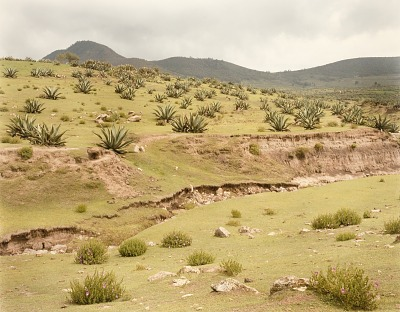 Maguey Field, Pachuea, Hildalgo, Mexico, from the portfolio Shadowless Places, Deserts of the Southwest