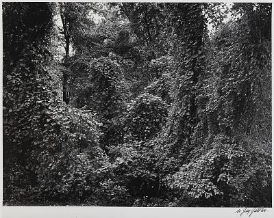 Foliage, Caumsett Park, Long Island