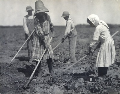 Young Russian Immigrants Hoeing Sugar Beets, Colorado