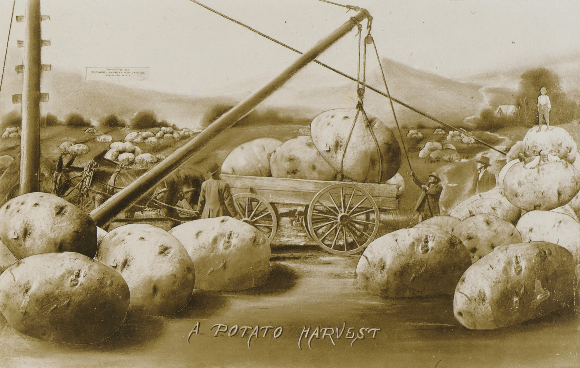 images for A Potato Harvest