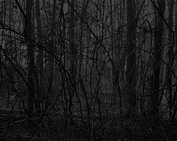 Untitled #17 (Forest), from the series Night Coming Tenderly, Black