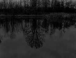 Untitled #13 (Trees and Reflections), from the series Night Coming Tenderly, Black