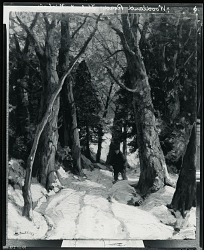 Woodland Road [painting] / (photographed by Peter A. Juley & Son)