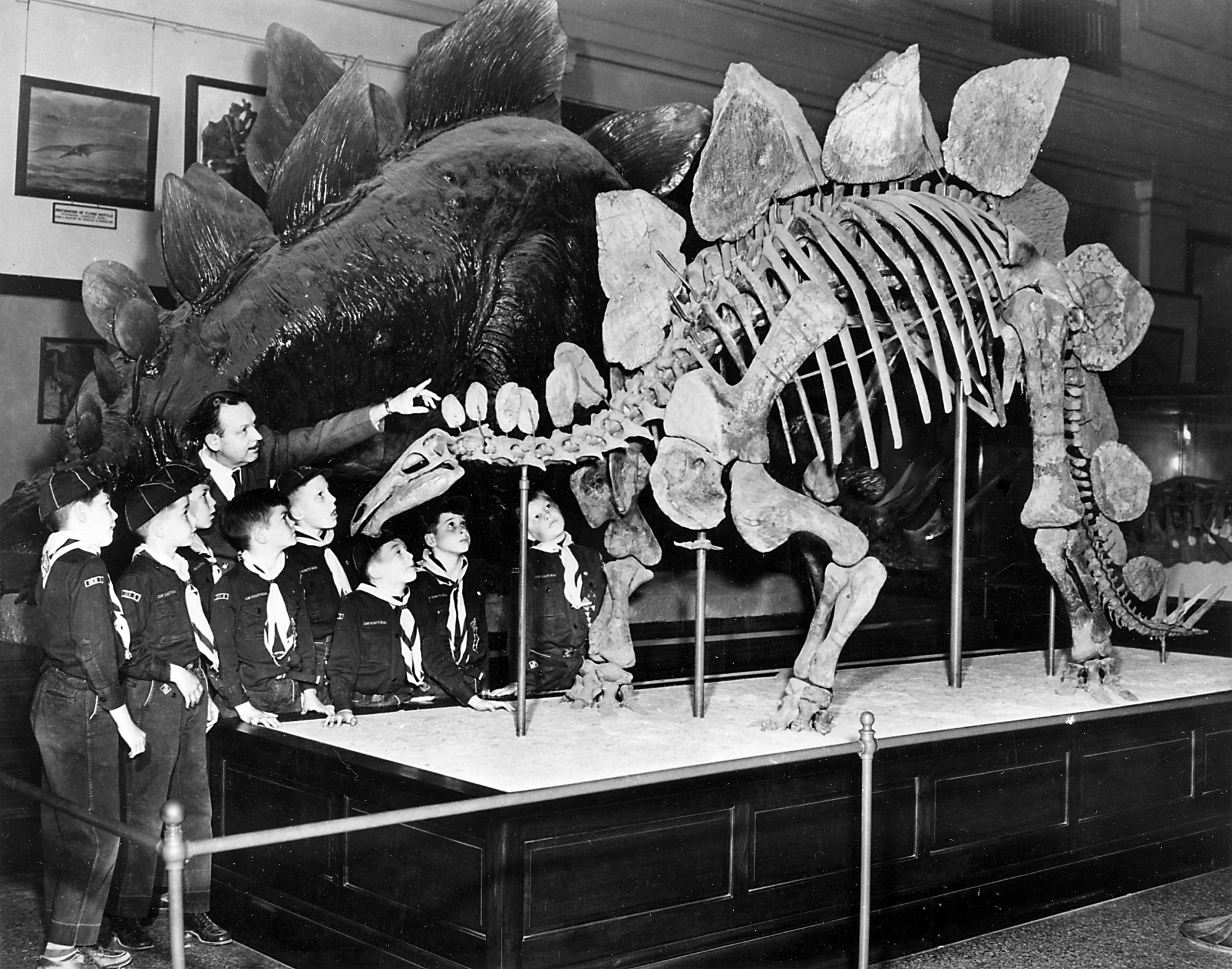 Cub Scouts View the Stegosaurus