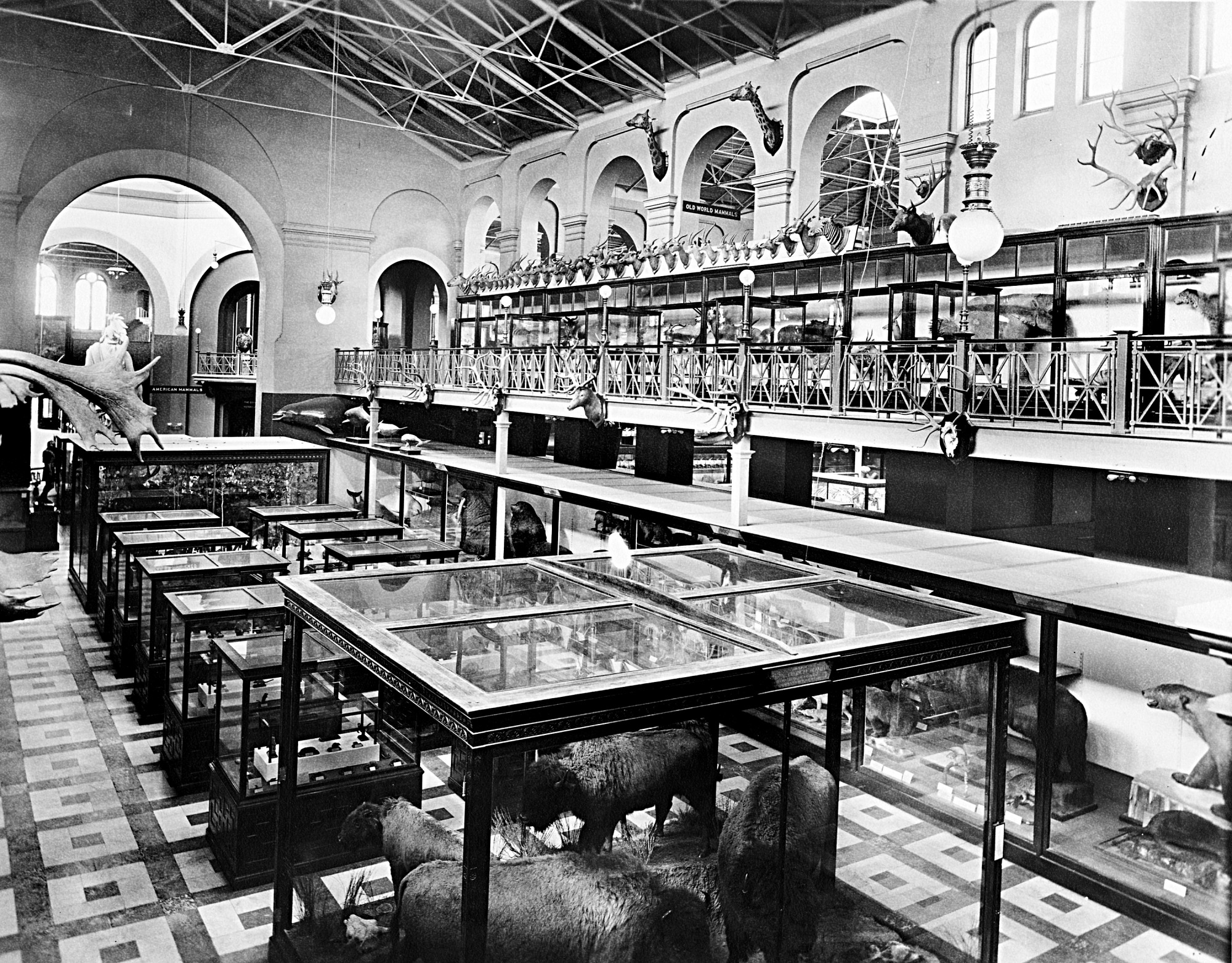 Mammal Hall, U.S. National Museum