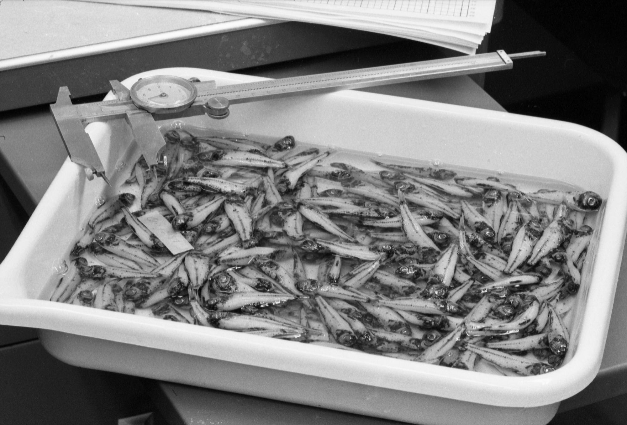 Study of Mercury Content in Fish