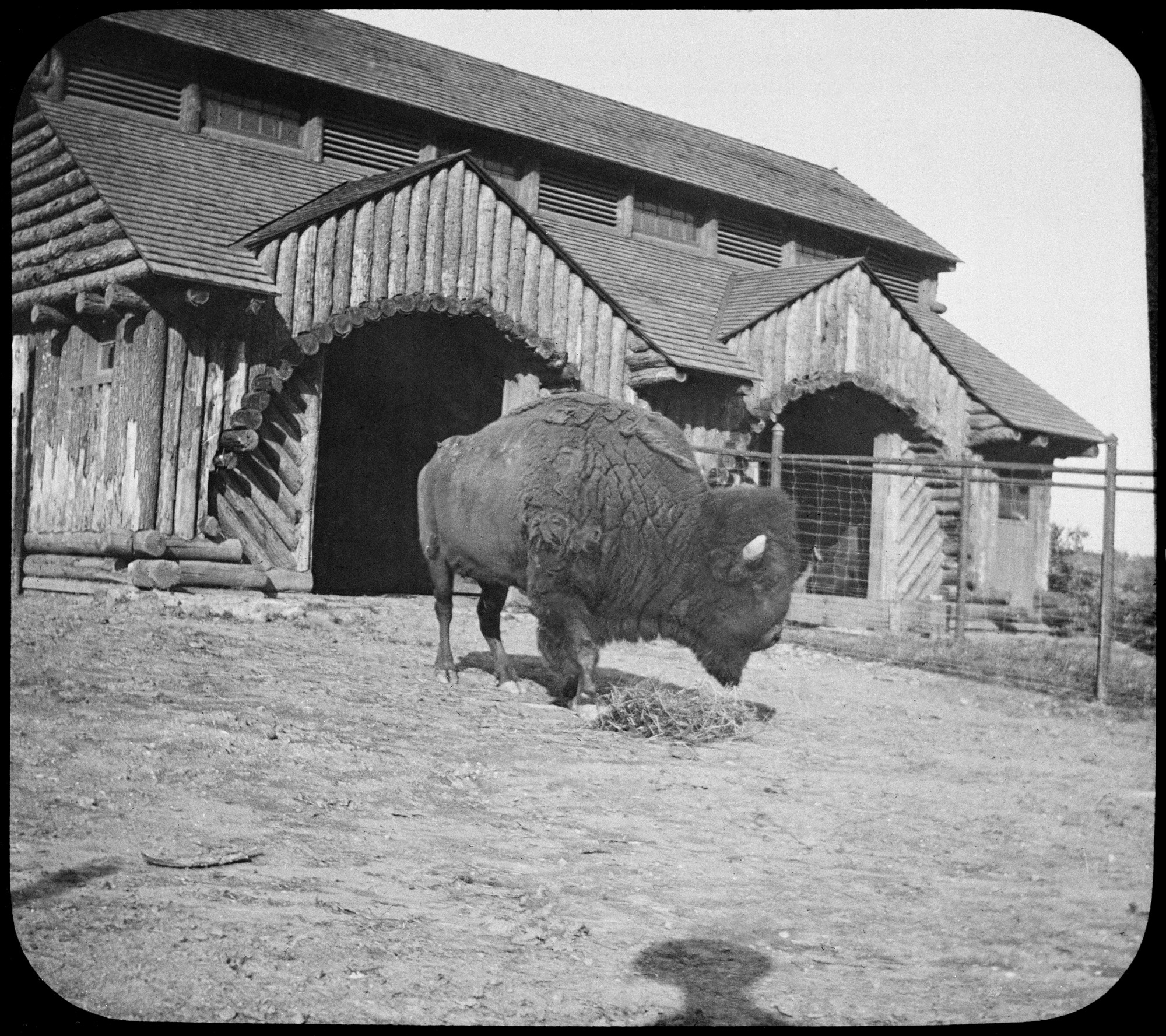Buffalo Barn, National Zoo, by Unknown, 1892, Smithsonian Archives - History Div, 81-2138.