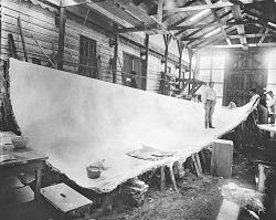 Exhibit Preparation for Whale Exhibit