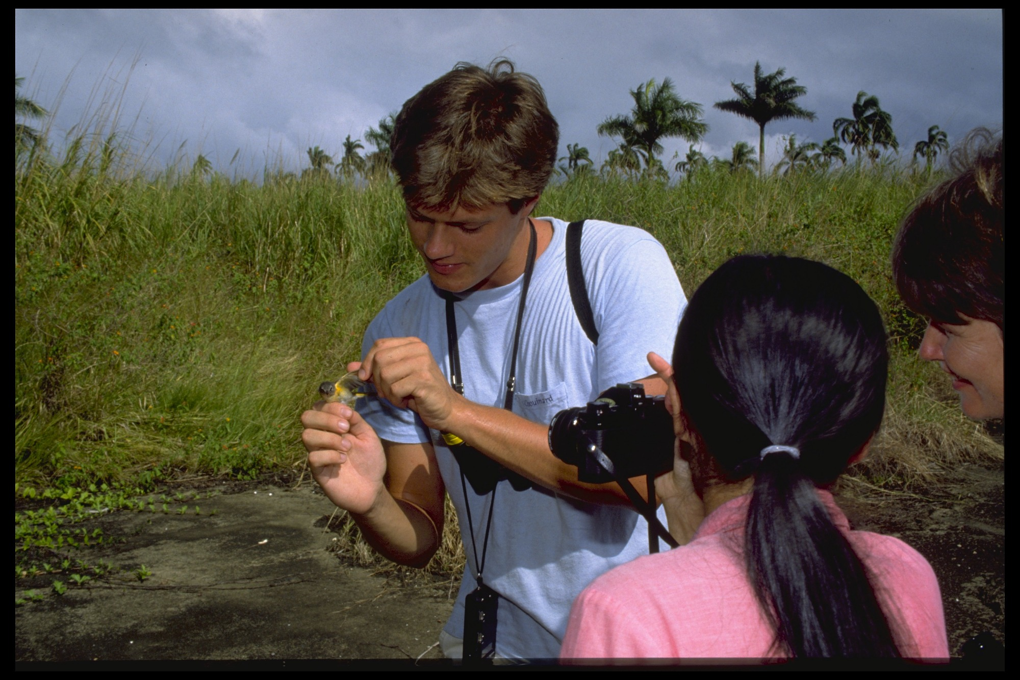 images for Mist Netting of Tropical Birds, Panama, STRI