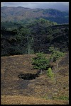 Documentation of Deforestation near El Llano-Carti Road in the Kuna Yala Area of Panama, STRI