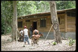 Ecology Course, Panama, STRI