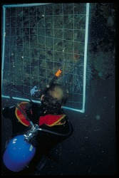 Underwater Research, Panama, STRI