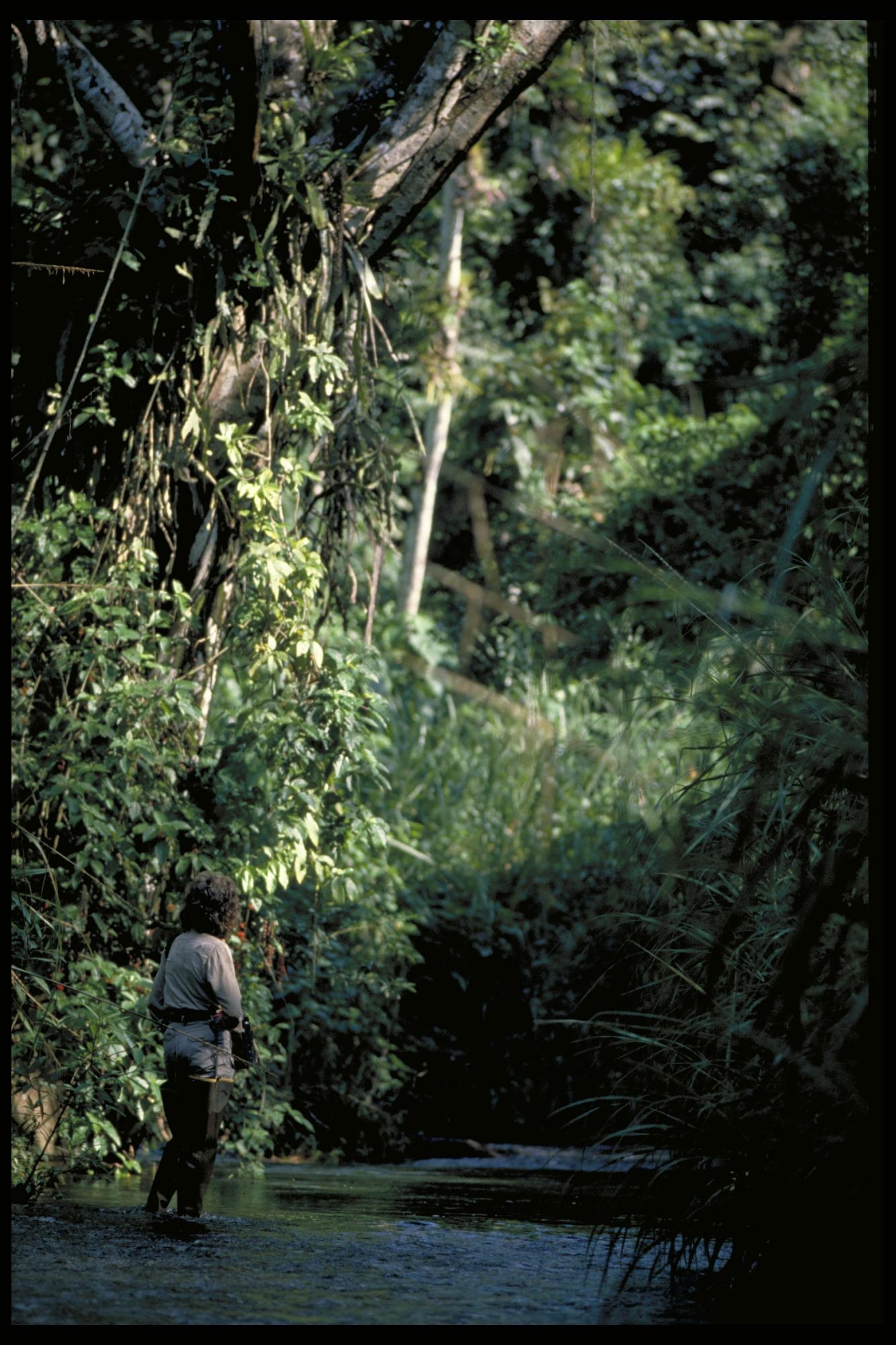 Ornithological Fieldwork, Panama, STRI