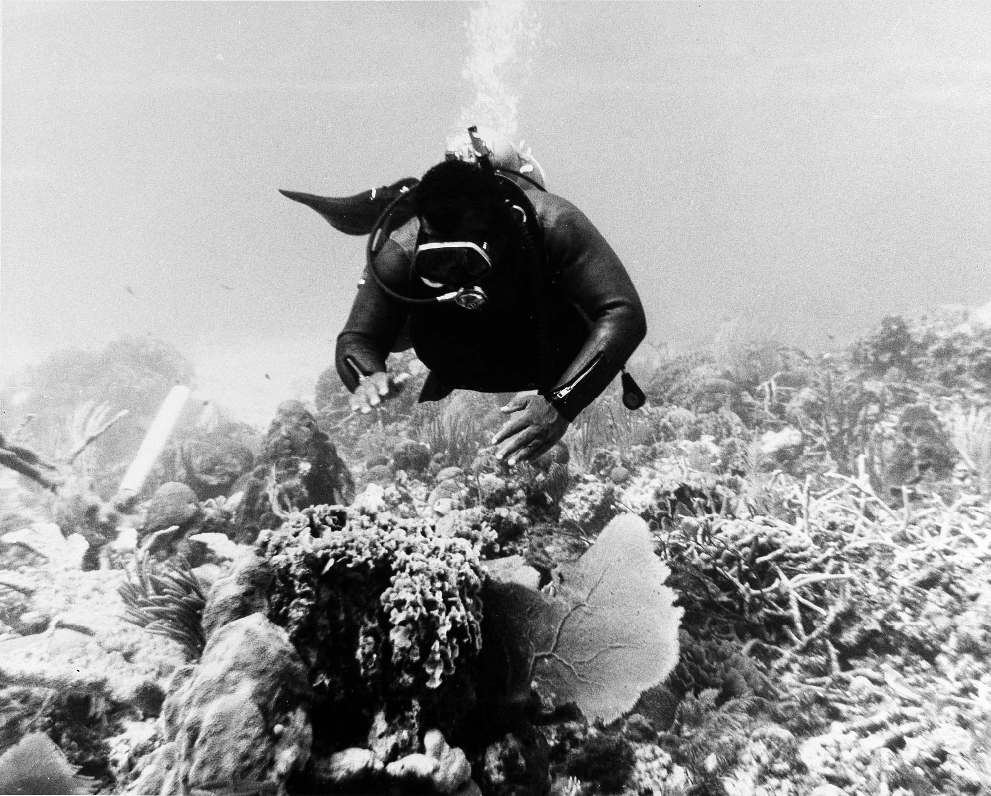 John Kinard Diving in the Caribbean