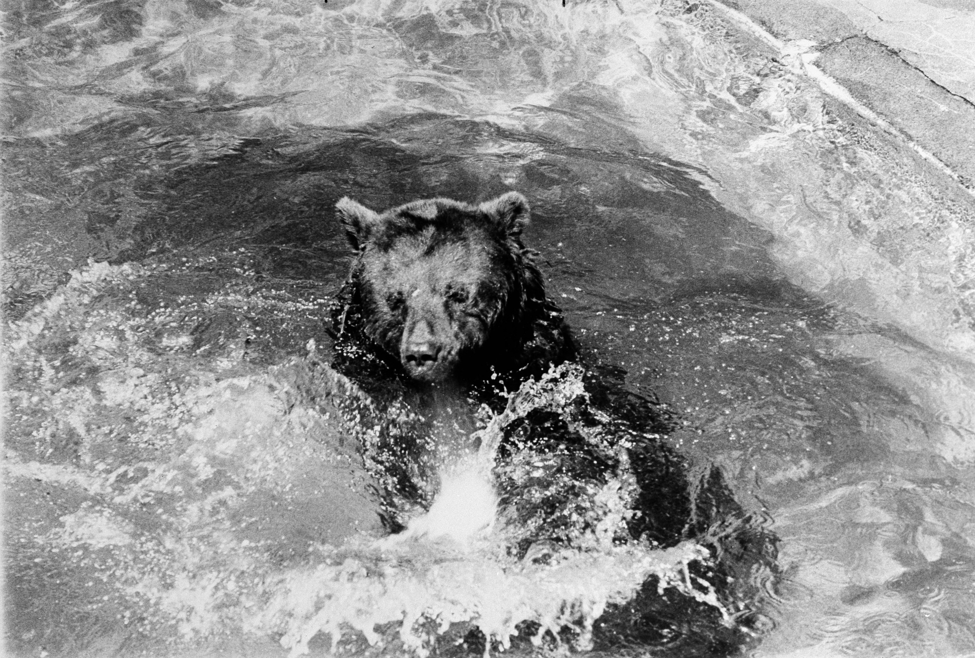 Smokey Bear Frolicking in a Pool