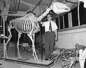 Image of Frank M. Greenwell and Racehorse Skeleton
