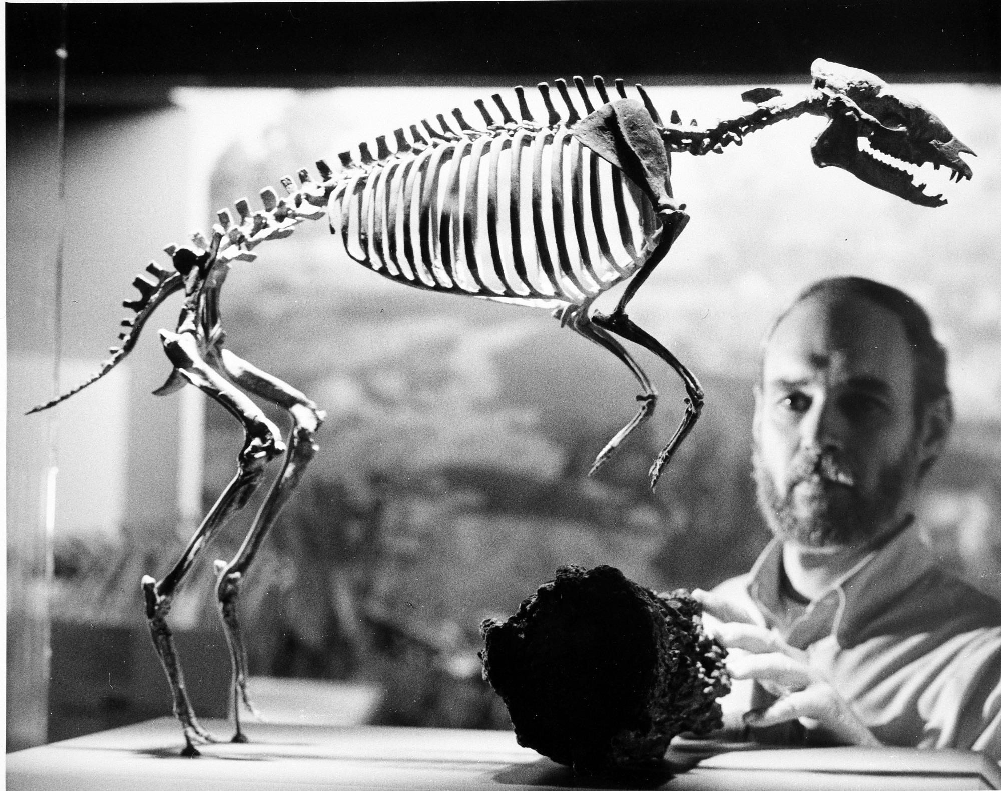 Robert J. Emry and Hyracotherium Skeleton