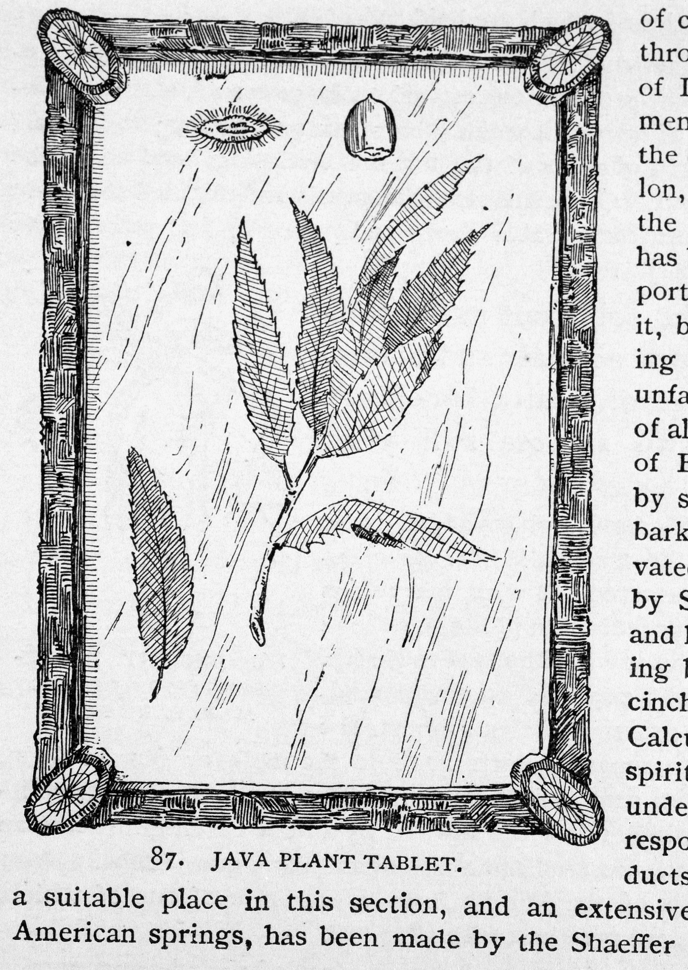 Engraving of a Java Plant Tablet, by Unknown, 1886, Smithsonian Archives - History Div, 95-20327.