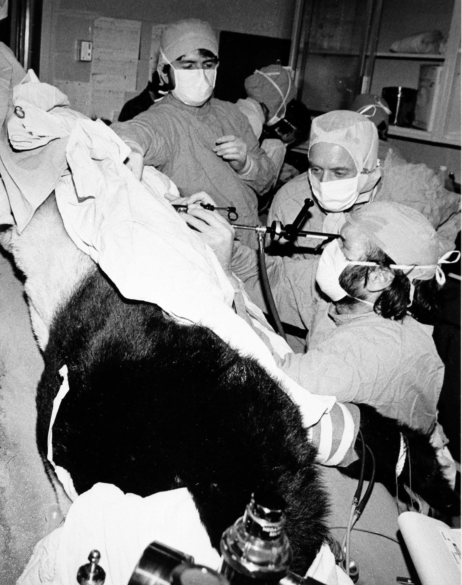 Medical Examination of Giant Panda