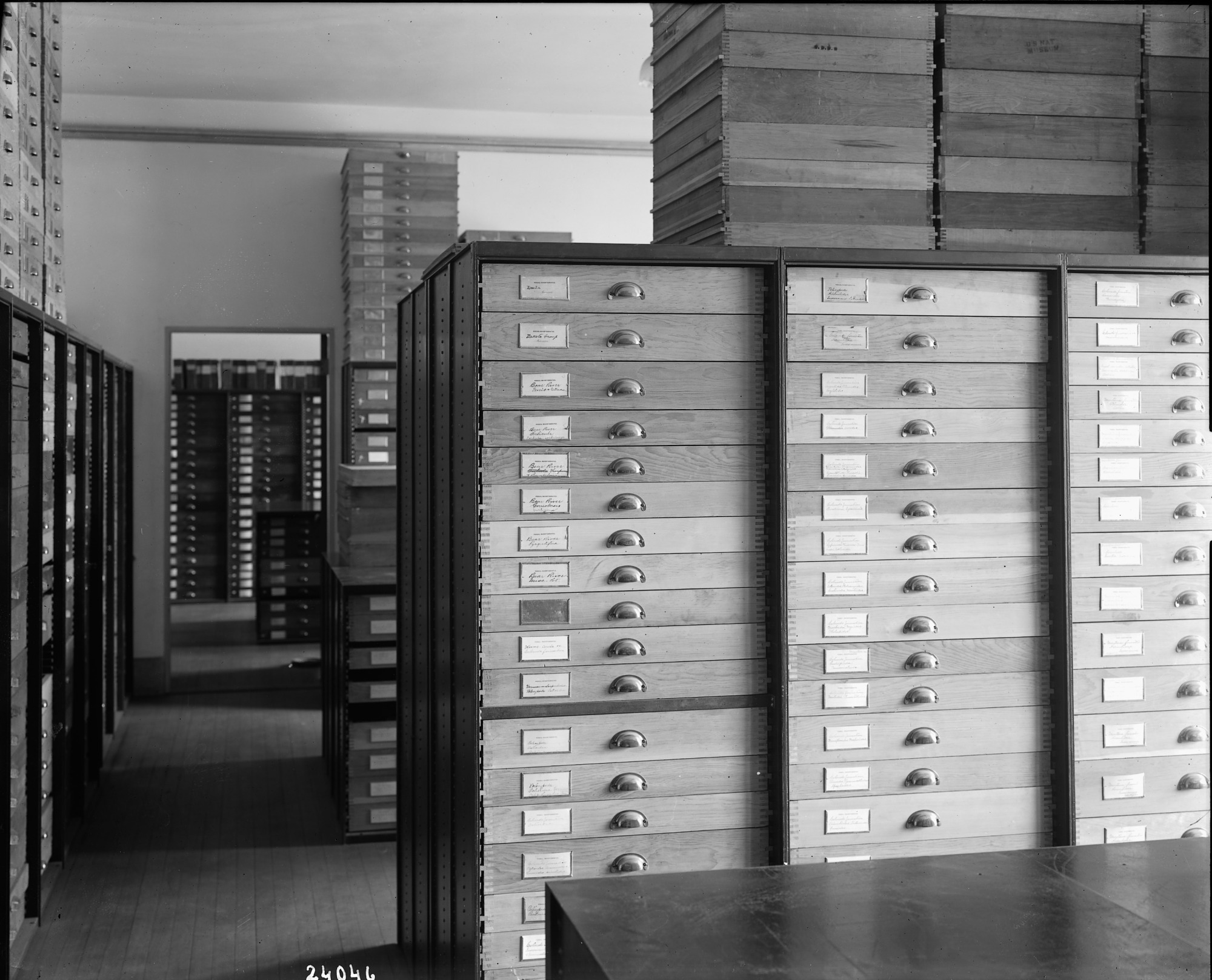 Storage in the Paleontology Laboratory, National Museum of Natural History, 1911