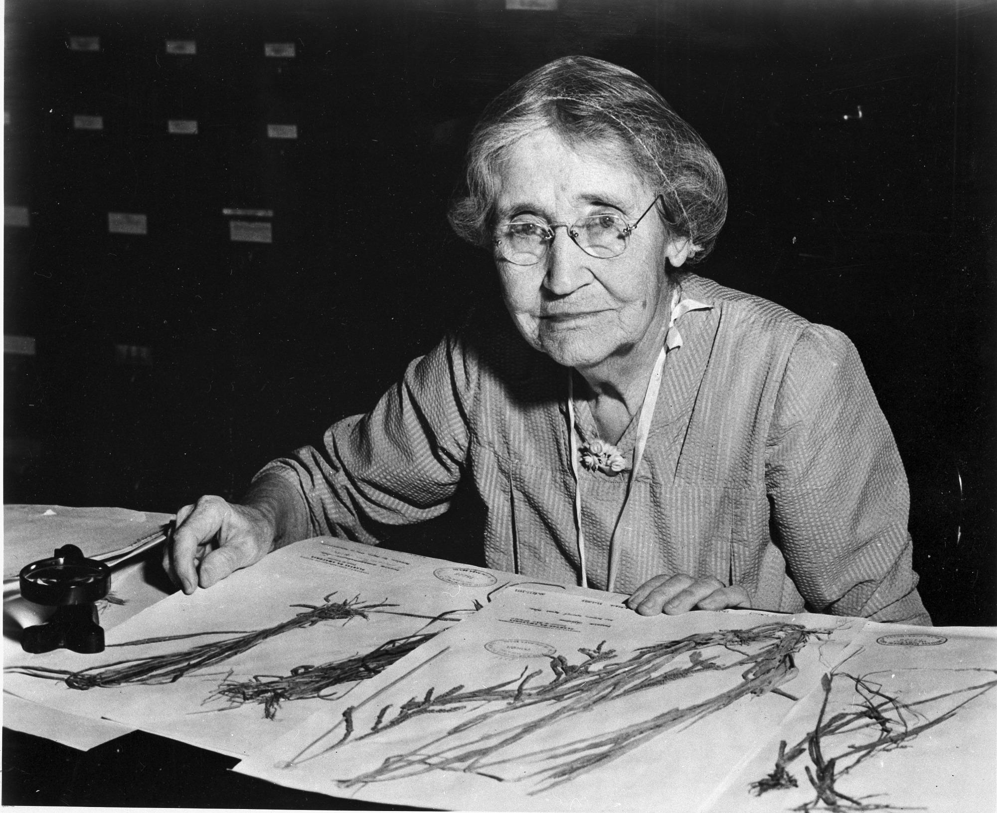 Mary Agnes Chase, Botanist