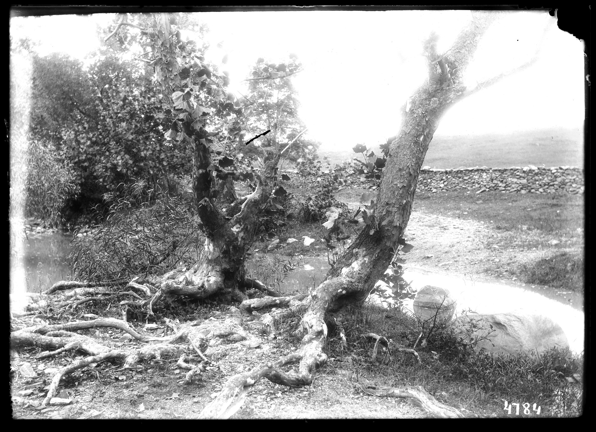 Unidentified Farm, 1880, Smithsonian Institution Archives, SIA Acc. 11-006 [MAH-4784].