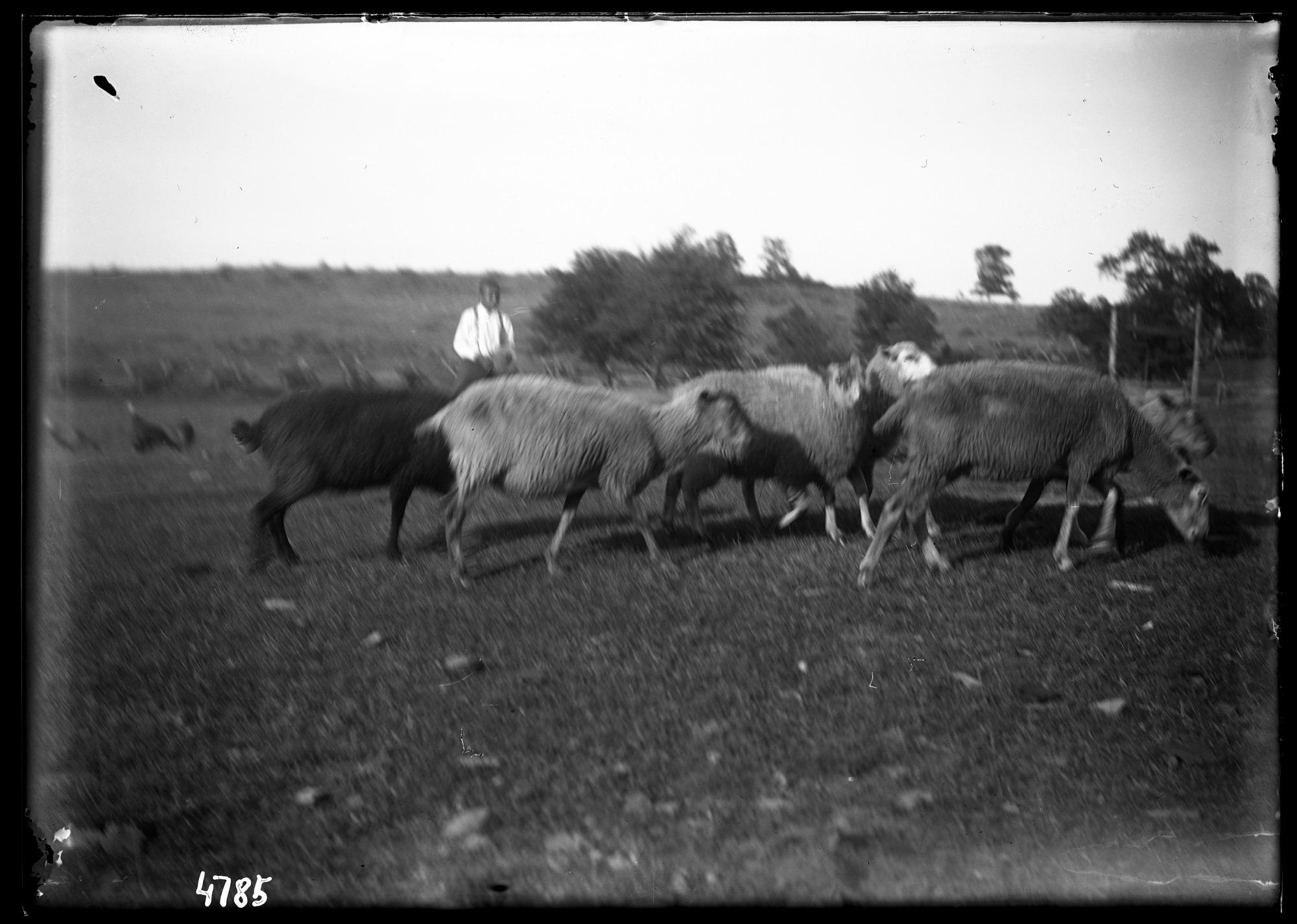 Unidentified Farm, 1880, Smithsonian Institution Archives, SIA Acc. 11-006 [MAH-4785].