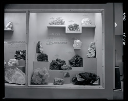 """Halides"" Exhibit Case"