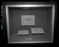 """Pearls"" Exhibit Case"