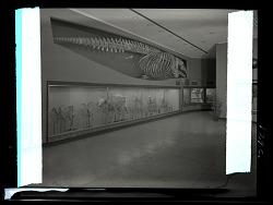 Osteology Exhibits