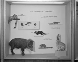 Disease-Bearing Mammals, National Museum of Natural History