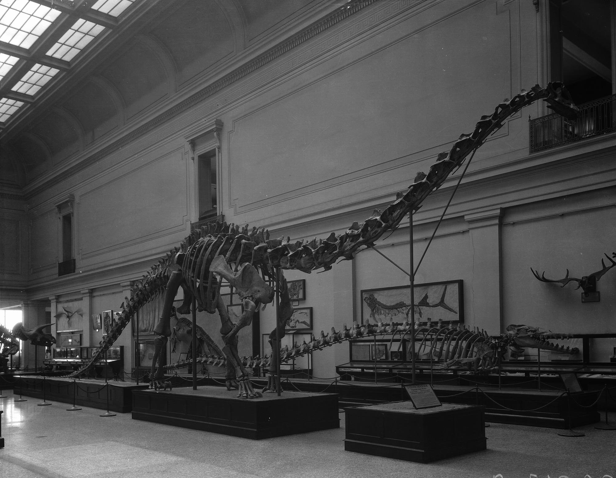 Extinct Monsters Hall in Natural History Museum, late 1930s