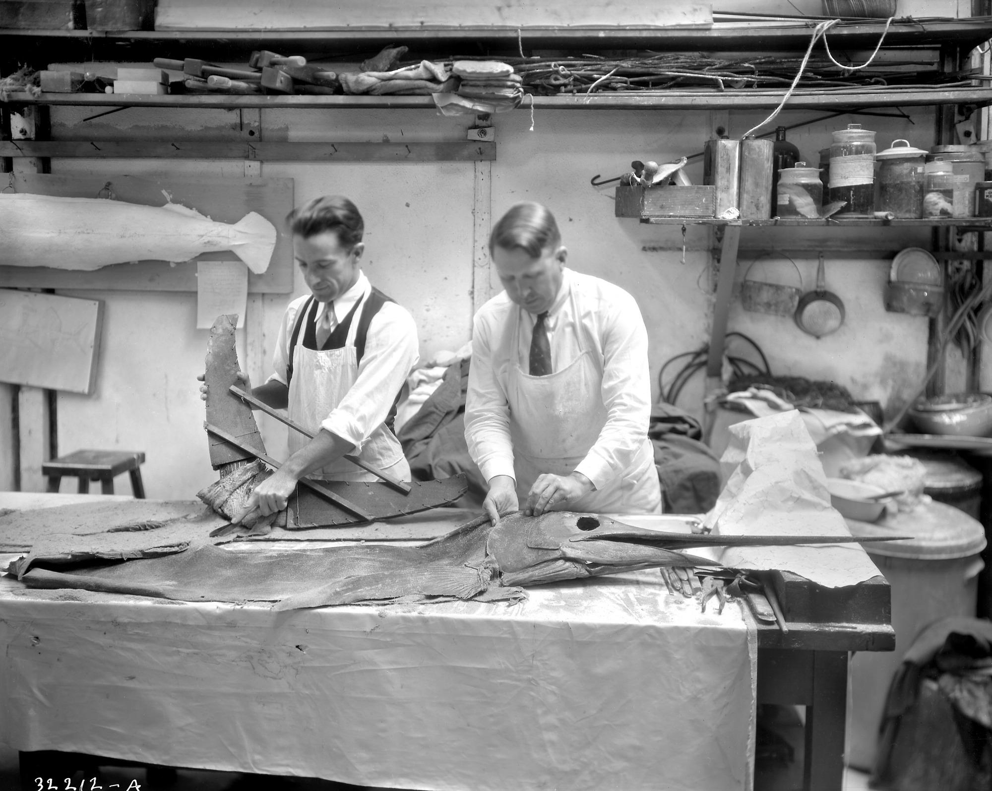 Aschemeier and Perrygo Working on Roosevelt's Sailfish