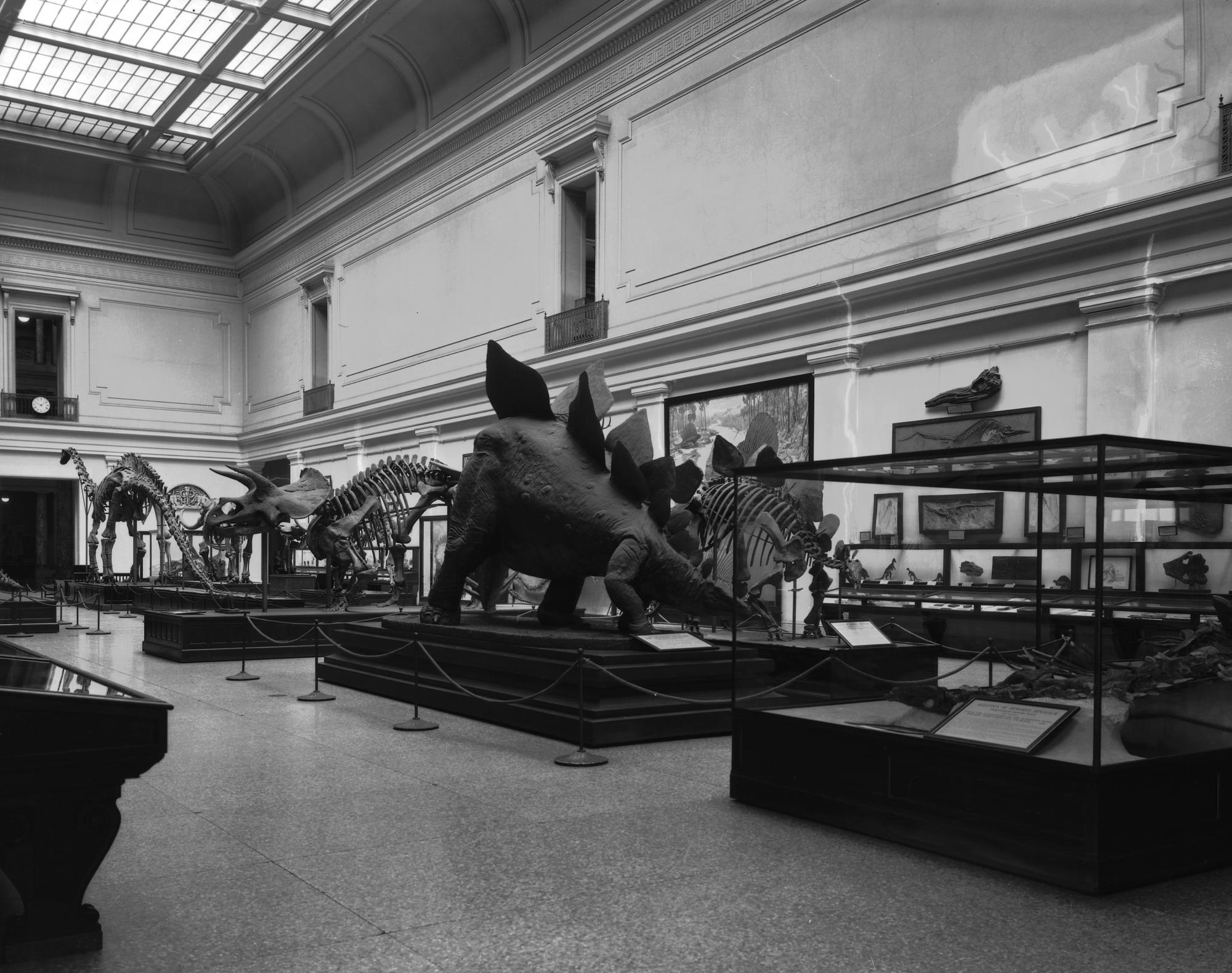 May 7 Vertebrate Paleontology Hall, NHB