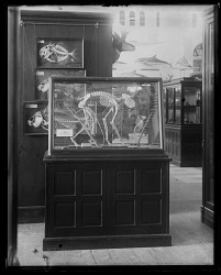 Paleontology and Comparative Anatomy Exhibit
