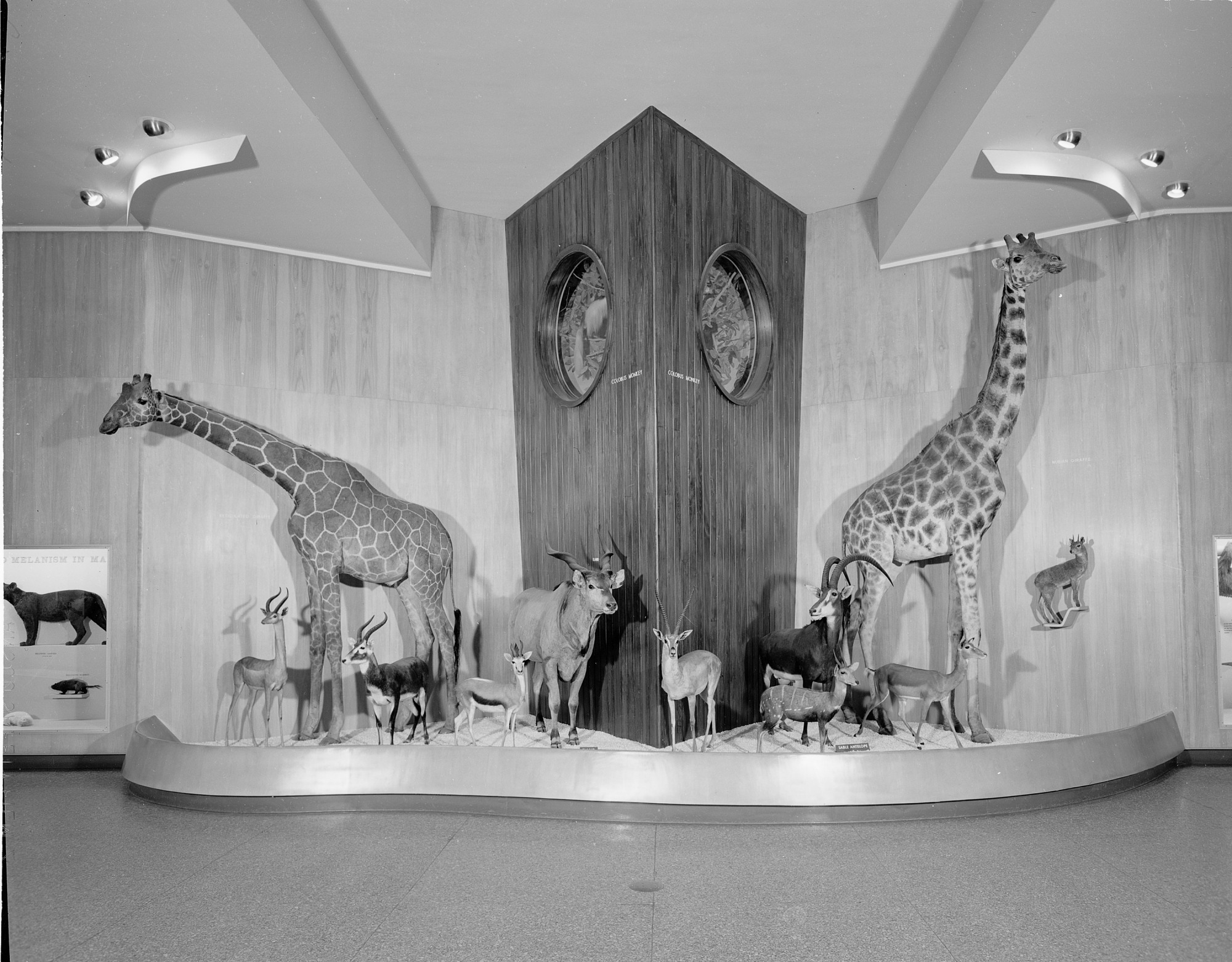 Animals from Africa, Hall of Mammals, National Museum of Natural History
