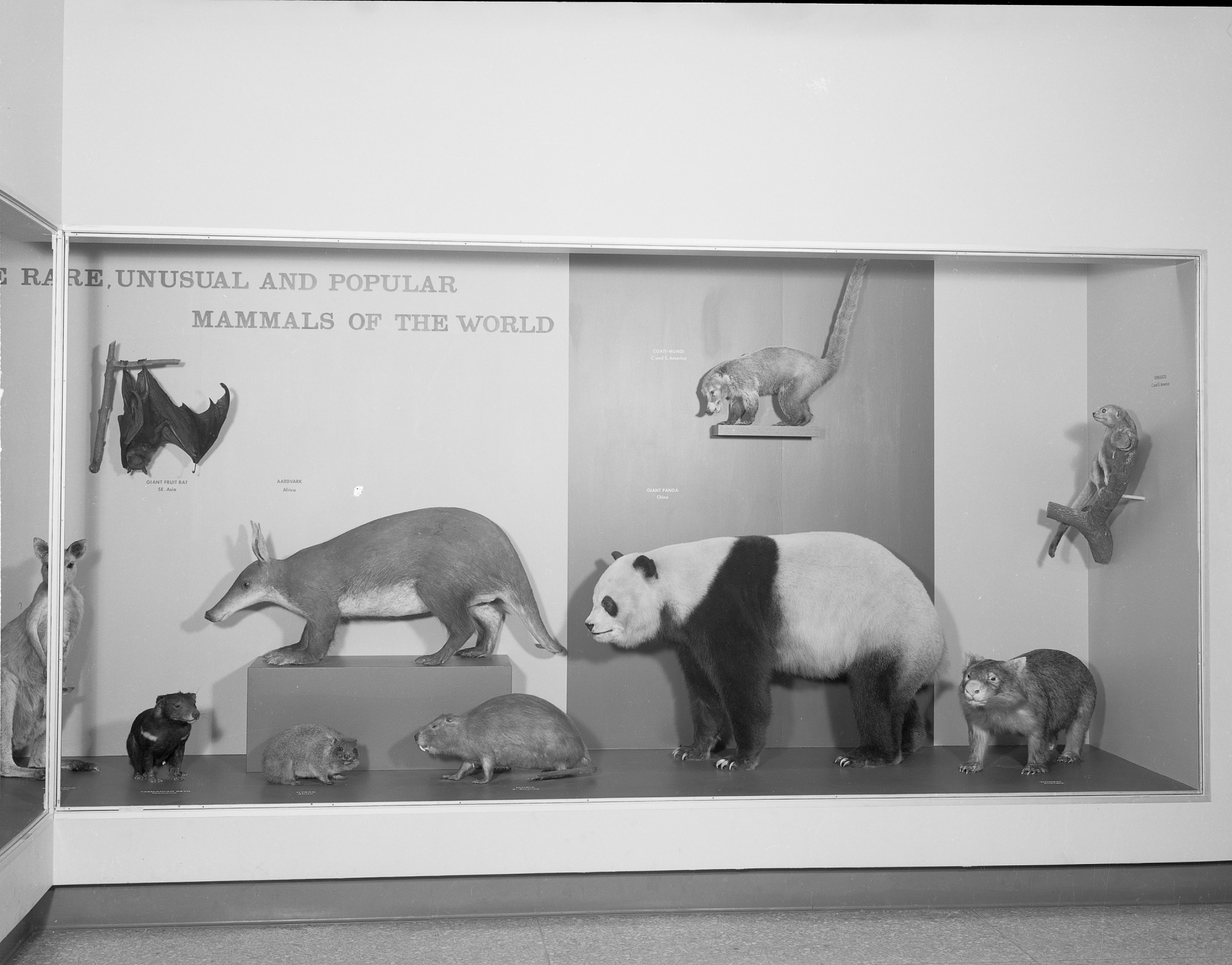 Rare, Unusual and Popular Mammals of the World, Exhibit