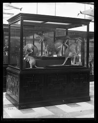 Mammals Exhibits
