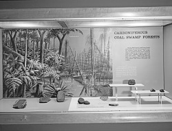 """""""Carboniferous Coal Swamp Forests"""" Exhibit"""
