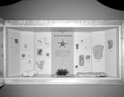 """""""Echinoderms"""" Exhibit"""